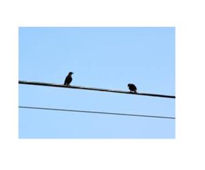 birds1.1