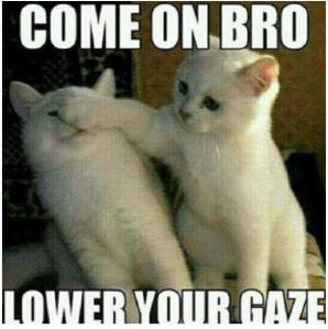 muslim cats