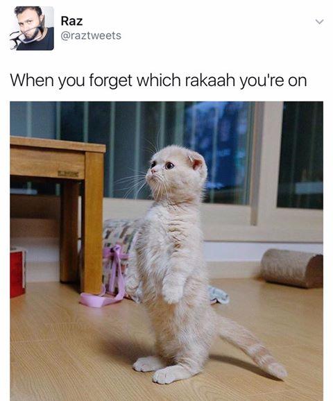 halal-funny-1