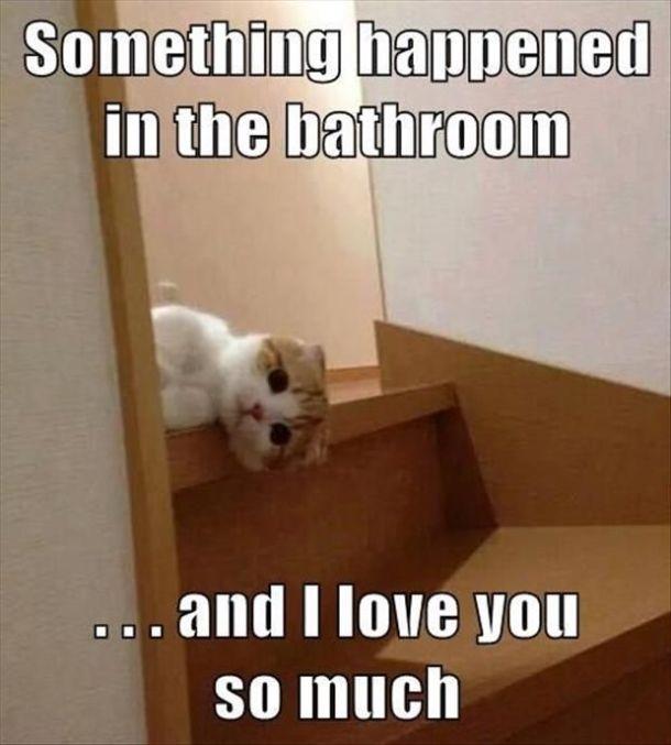 Bathroom Jokes Pictures bathroom jokes one liners   carpetcleaningvirginia