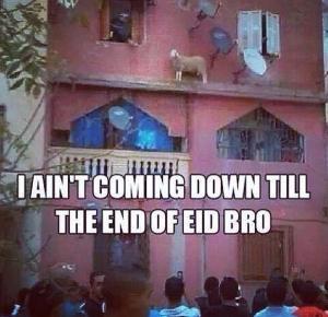 lamb alaa elsayed