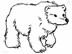 bear-colour