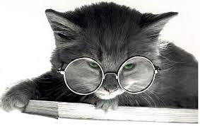 cat with spectacles