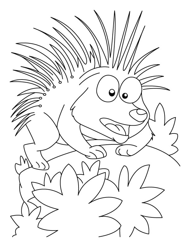 the fable of the porcupines stories for muslim kids