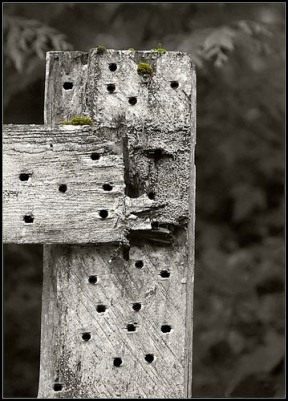 nail holes-in-fence